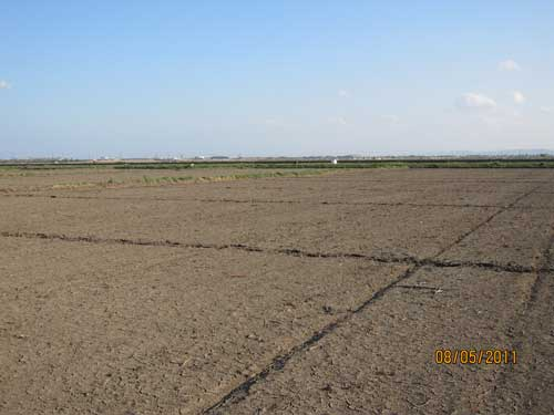 Figure 6. Crossing the field are lines of footprints made by searchers looking for bodies after the tsunami but before flood waters receded.